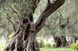 tronco-antiguo